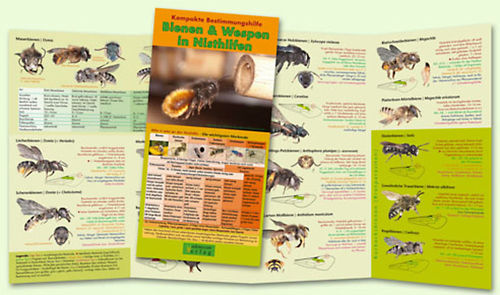 Bestimm-Flyer: Wildbienen & Wespen in Nisthilfen